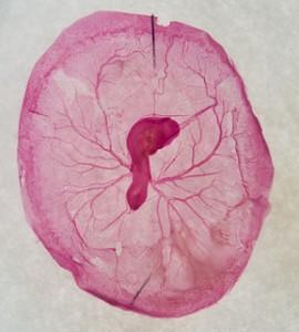 Catching Flack over Embryo Adoption