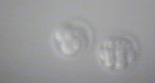 embryo-testing-show