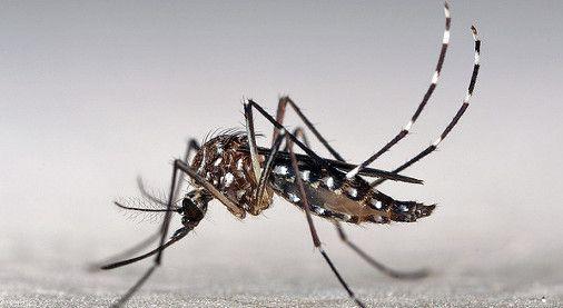 Zika-fertility-radio-show